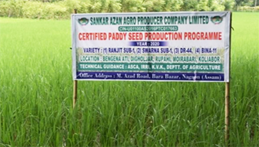 IRRI develops entrepreneurship in seed sector ...